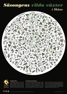 vildavaxter.jpg (462×647)