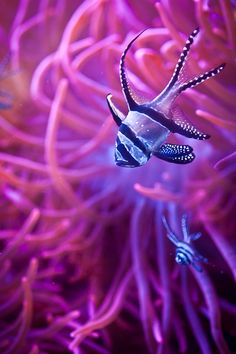 Colourful Sea Life