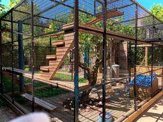 Outside Cat Enclosure, Diy Cat Enclosure, Outdoor Cat Run, Cat Fence, Cat Hotel, Cat Cages, Cat Playground, Cat Room, Feral Cats