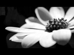 The Promise - Tracy Chapman - YouTube