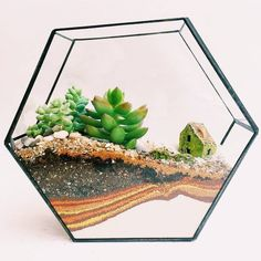 terrarium LOVE the use of color in the sand layers. It draws the eye d. succulent terrarium LOVE the use of color in the sand layers. It draws the eye d. succulent terrarium LOVE the use of color in the sand layers. It draws the eye d. Colorful Succulents, Hanging Succulents, Succulent Arrangements, Succulents Garden, Succulent Ideas, Suculentas Diy, Cactus Y Suculentas, Terrarium Wedding, Wedding Plants