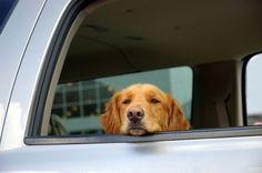 Alguns fatores podem agravar o enjoo do seu cachorro dentro do carro em movimento, mas há solução! Saiba como evitar essa situação.