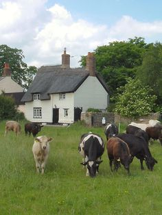 Country living in the summertime in an English country village, Binsey, Oxfordshire