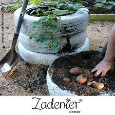 www.zadenier.com Tire Garden, Lawn And Garden, Indoor Garden, Garden Plants, Vegetable Garden, Farm Gardens, Outdoor Gardens, Tyres Recycle, Recycled Tires