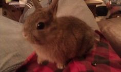 Sometimes I miss having a little bunny to play with!