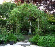 Rambler-Rosen ¿ Pflegeschnitt - Seite 1 - Rund um die Rose - Mein schöner Garten online