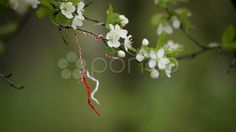 Flowers and Laces - Martisor - Stock Footage   by ionescu    #women #day #spring #Romania #Martisor #habit #custom #tradition #pond5.com #pond5 #pond_5 #stock #video #footage