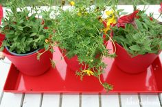 create a living centerpiece on your outdoor table with a variety of potted plants