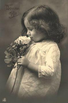 Vintage Rose Album: Różana Kruszynka