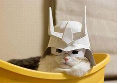 Samurai paper hat cat