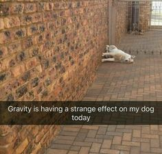 Gravity is having a strange effect on my dog today