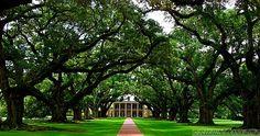 Oak Alley Plantation (originally Bon Séjour).  Located on the Mississippi River in Vacherie, Louisiana.