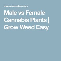 Male vs Female Cannabis Plants | Grow Weed Easy