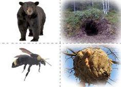 Los animales y su vivienda.