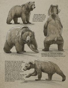 Art tutorials for all — anatoref: Bear by Aaron Blaise - Baer - Animales Animal Sketches, Animal Drawings, Drawing Animals, Ours Grizzly, Polar Bear Drawing, Urso Bear, Elefante Tattoo, Bear Sketch, Bear Character