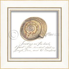 Sundial Shell (White Frame) - Sea Shells - Small Painting By Kolene Spicher, Spicher and Company - Distinguished Imports #seashell #ocean #painting #kolenespicher