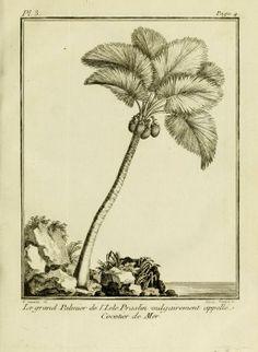 Voyage à la Nouvelle Guinée : - Biodiversity Heritage Library