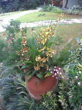 Jardins e Flores