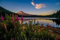 Trillium Lake & Mt. Hood - Oregon (96 pieces)