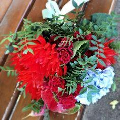 Autumn flowers. Dahlia