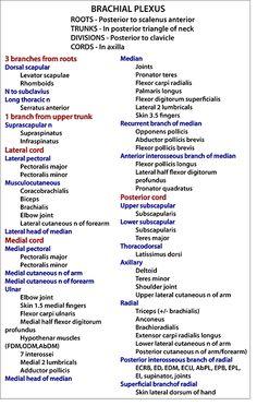 Instant Anatomy - Arm - Nerves - Skin - Specific - Brachial plexus