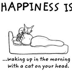 Happiness is waking up with a cat. Period.