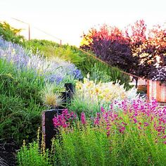 How to create a backyard meadow
