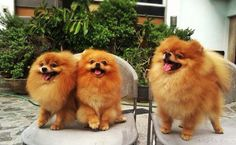 happy poms!