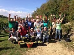 #Vendanges2015 Les vendangeurs du Domaine Joseph GROSS à Wolxheim #DrinkAlsace