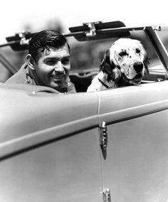 Clark Gable dog