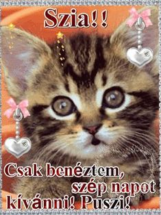 Good Morning Good Night, Cat Lovers, About Me Blog, Thankful, Album, Memes, Funny, Happy, Cards
