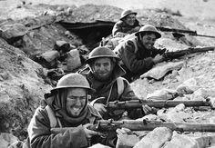 Ratas de Tobruk - Bichos - http://www.gehm.es/segundaguerra-mundial/ratas-de-tobruk-bichos/