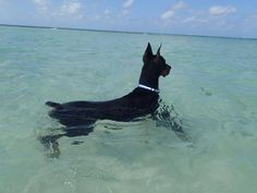 "Laura Horan ""Blue"" Destas Midnight Blue loves floating in the sea in front of Rum Point, Grand Cayman watching for Turtles"