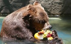 Um urso se refresca com um 'sorvete' de frutas congeladas no zoológico do rio de Janeiro, onde as temperaturas chegaram aos 40ºc. Foto: Antonio Lacerda/Efe