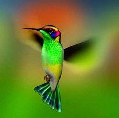 Hummingbird ... :)