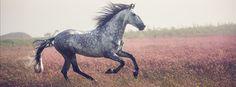 "scarlettjane22: "" Ciara Doone Rush Photography """