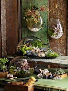 Reciclar, Reutilizar y Reducir : Geniales terrarios de suculentas