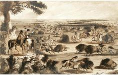 A Buffalo Surround in the Pawnee Country. In 1837, Alfred Jacob Miller accompanied Captain William Drummond Stewart on an expedition into the Rocky Mountains, during which he made hundreds of on-the-spot sketches of Indian life.