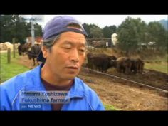 He wants the world to know.....: Fukushima farmer refuses to slaughter cows with white spots