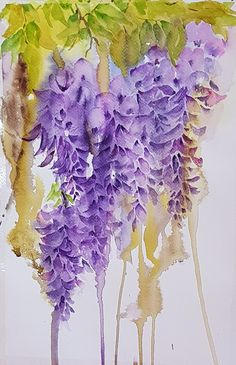 Wisteria  Watercolor flowers  ' flowerpaintings.in '