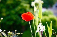 #flowers #garden #seedball