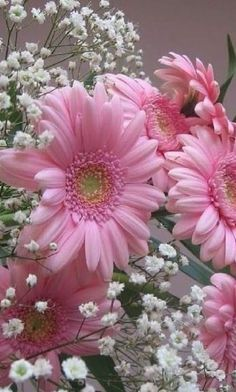 Pink Flowers, Beautiful Flowers, Flower Phone Wallpaper, Mother Nature, Daisy, Plants, Gardens, Fire Quotes, Roses