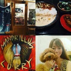 ワンちゃん店内オッケーの素敵なお店で美味しいカレー食べましたよ。😋😋😋 ・ 詳細は【ミワとリオンのおでかけレポートby ドギーズ神戸】からどうぞ!😉😉 ・ ⬇️⬇️⬇️⬇️⬇️⬇️⬇️⬇️⬇️⬇️↙️ @doggieskobe.miwa_and_lion  #犬とおでかけ #犬同伴 #犬 #愛犬 #トイプードル #トイプードル大好き #トイプードルブラウン #プードル #カフェ #レストラン #神戸 #ドギーズ神戸  #kobe #doggieskobe #dog #dogs #doglover #dogstagram #toypoodle #poodle #poodlegram #poodlelife #poodlesofinstagram  #love #cute #happy #miwa_and_lion#県庁前 #curryandrice