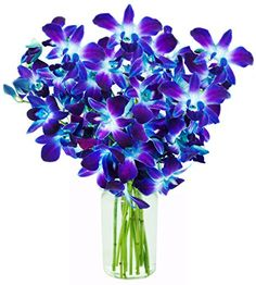 Mother's Day Special: KaBloom Exotic Blue Sapphire Orchid Bouquet of 10 Fresh Blue Dendrobium Orchids from Thailand with Vase flower delivery service . Exotic Flowers, Cut Flowers, Fresh Flowers, Send Flowers, Blue Dendrobium Orchids, Purple Orchids, Blue Orchid Bouquet, Orchid Flowers, Fresco