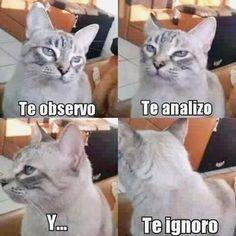✔✔✔ Disfruta con lo mejor en memes mas graciosos de animales, gifs animados graciosos en movimiento, gifs de gracias, gifs romanos y gifs kpop graciosos. ➛ http://www.diverint.com/memes-graciosos-mexicanos-chocomilk-leche/