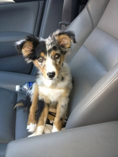 """""""Don't even need to keep my eyes on the road cause I've got my ears!"""" 