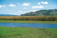 La laguna de Fúquene tiene en su periferia un sistema de canales de drenaje con fines agrícolas y ganaderos, en los que también ha crecido una abundante vegetación de plantas acuáticas.