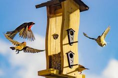 If you avoid these top 10 bird feeding mistakes you will easily attract many hungry birds to your feeders. Types Of Berries, Avocado Plant, Any Birds, How To Attract Birds, Bird Pictures, Birds Photos, Pet Paws, Backyard Birds, Wild Birds
