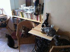 Kočičí kavárna na Smíchově