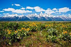 Wildflowers and the Tetons, Jackson Hole, Wyoming